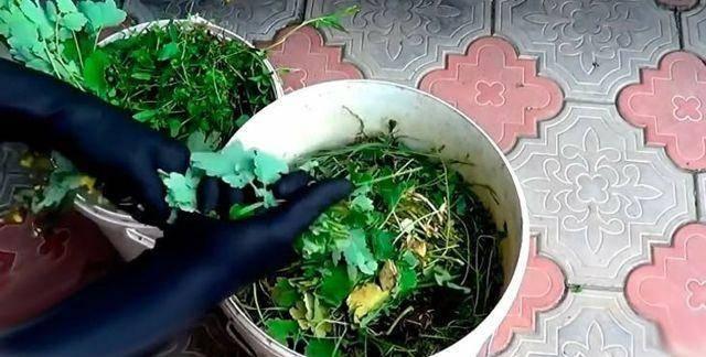 Удобрение из травы и сорняков: как сделать жидкую подкормку в бочке