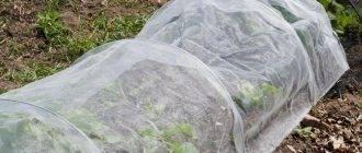Обрезка голубики: советы для для начинающих. уход за голубикой осенью - подготовка к зиме