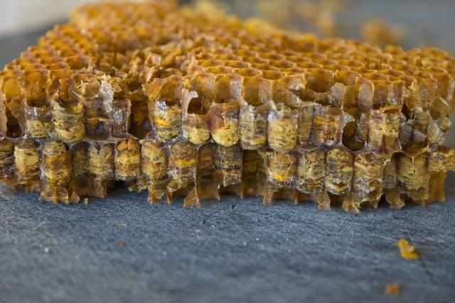 Кормление пчел медом в зимний период