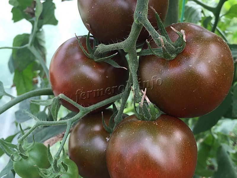 Мы вам посоветуем сорта черных помидоров, а ваше дело – выбирать!