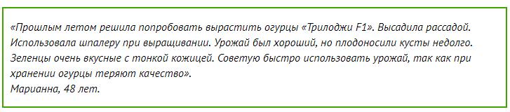 Сорт огурцов Трилоджи: описание и характеристика