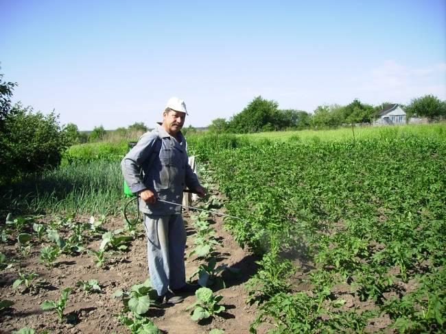 Обработка картофеля перед посадкой от болезней и вредителей, фото