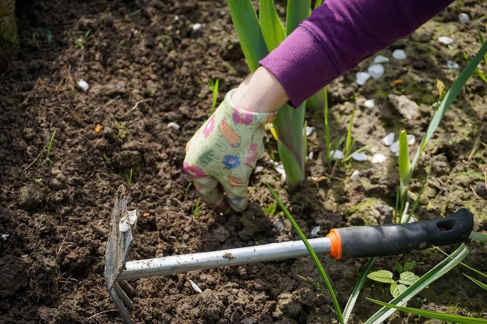 Борьба с крапивой на даче — как избавиться от сорняка навсегда