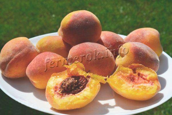 Характеристика вкуснейшего американского сорта персика редхейвен