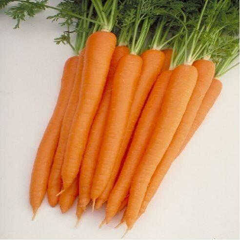 Высокоурожайный гибрид моркови первого поколения: балтимор f1