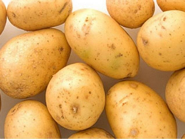 Характеристика сортов картофеля «весна розовая» и «весна белая»