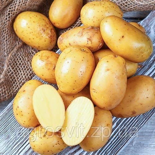 Картофель «королева анна»: описание сорта, основные характеристики