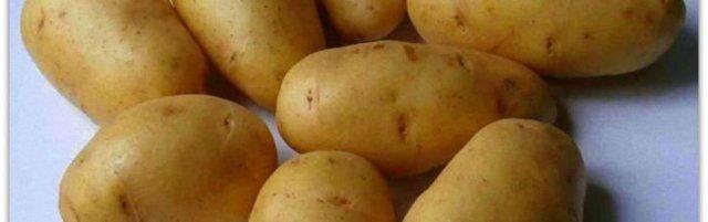 Ультраранние сорта картофеля сорта картофеля: плюсы выращивания