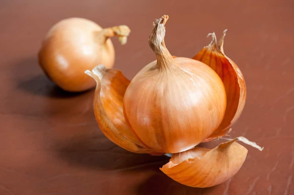 Подкормка рассады томатов луковой шелухой: как это сделать?