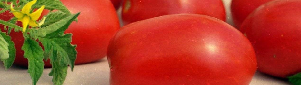 Томат курносик: особенности сорта, урожайность, отзывы