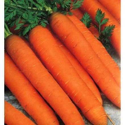 Морковь санта круз f1 — описание сорта, фото, отзывы, посадка и уход