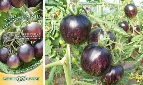 Томат альфа: описание сорта, отзывы, фото, характеристика, урожайность