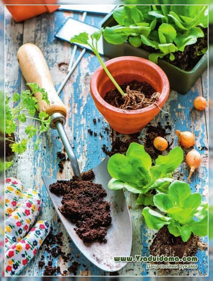 Посев на рассаду мелких семян: 10 хитростей от галины кизимы