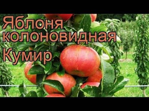 Яблоня Алые паруса: описание, как правильно посадить, фото и отзывы