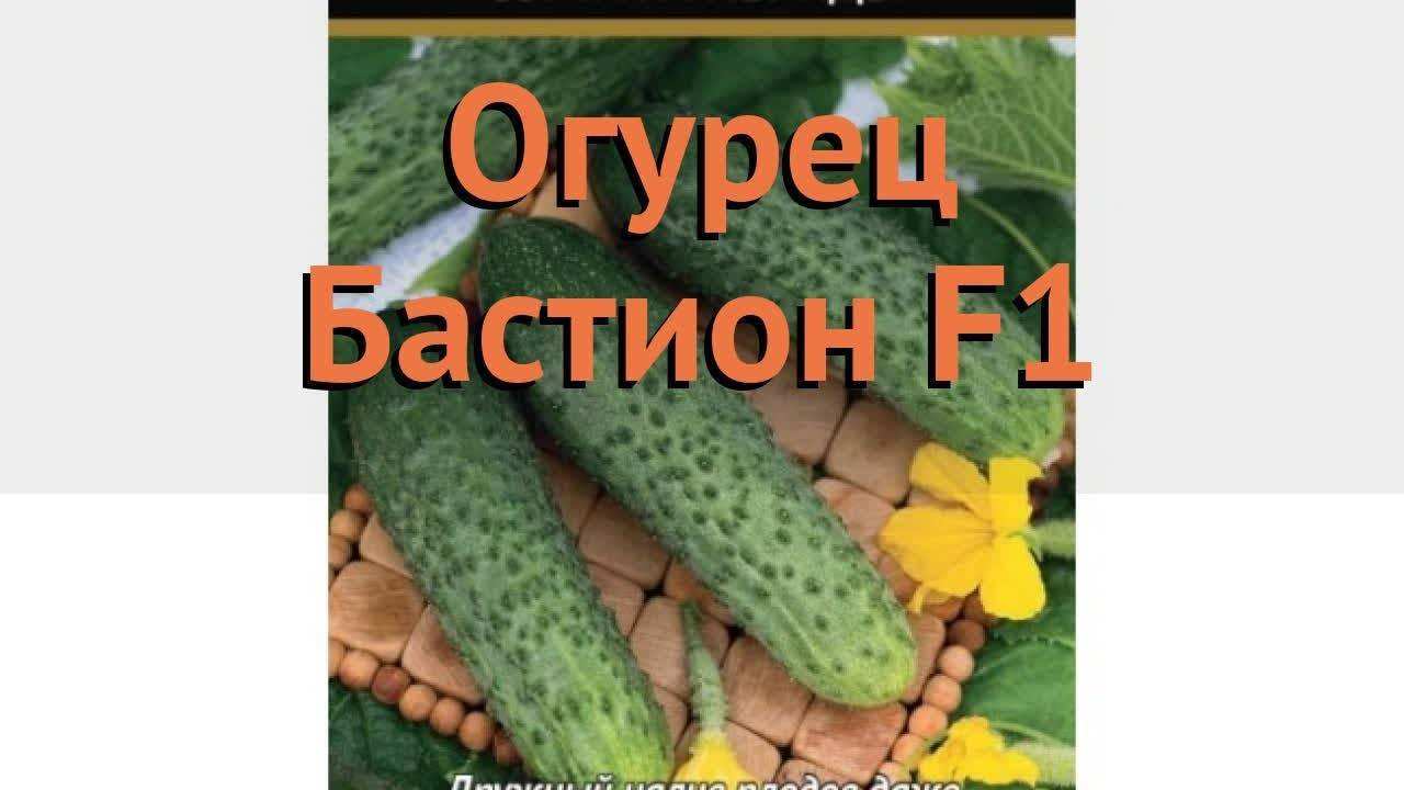 Огурец клавдия f1: отзывы, описание сорта, фото, характеристика
