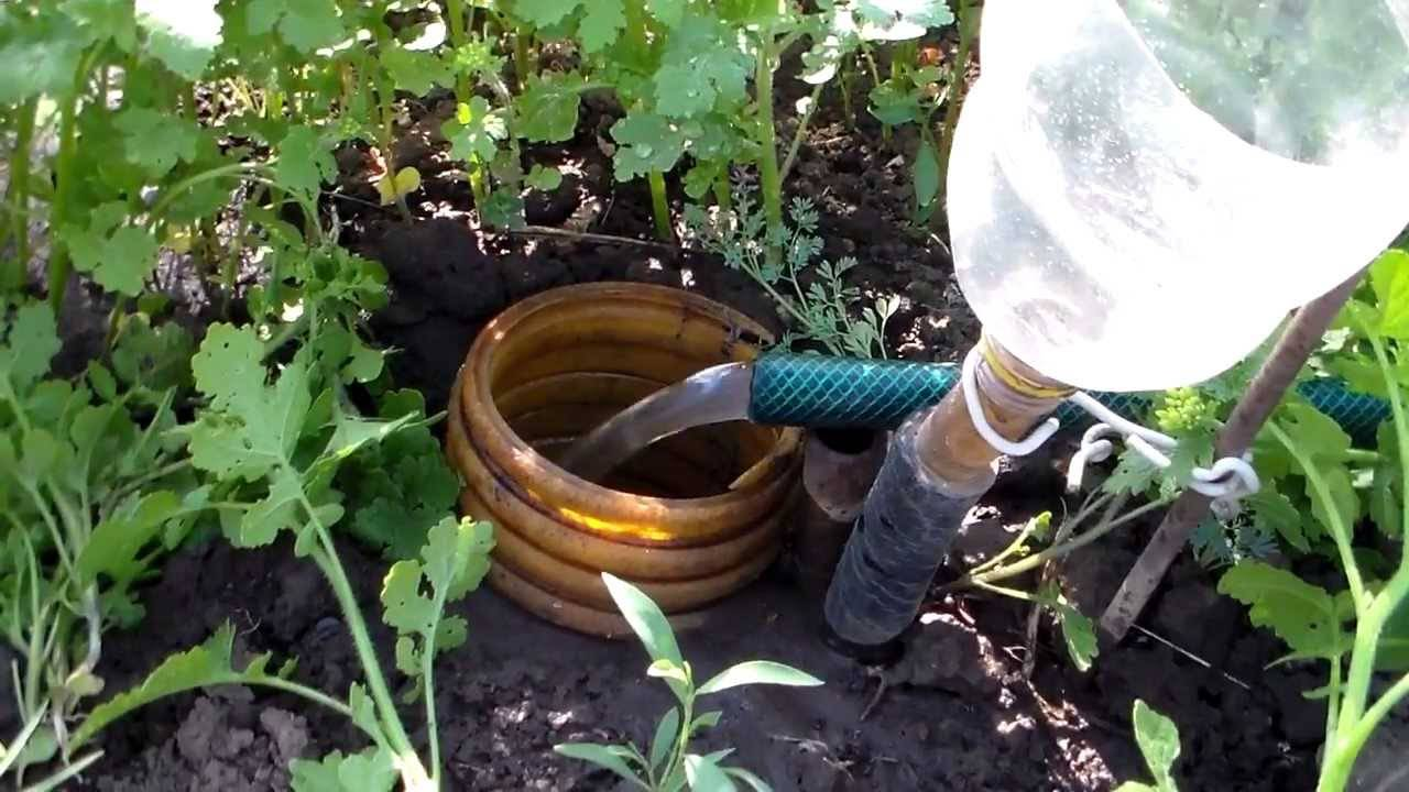 Саженец вишни: как поливать, сколько раз и чем