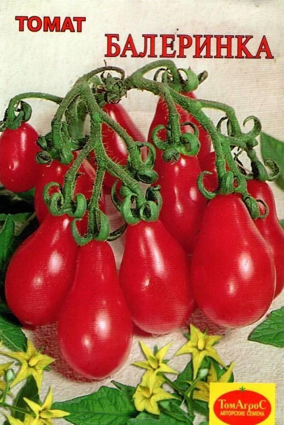 Ампельные томаты: сорта, особенности выращивания