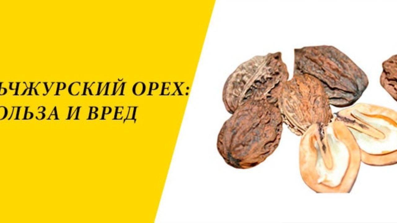 Как приготовить настойку из маньчжурского ореха?