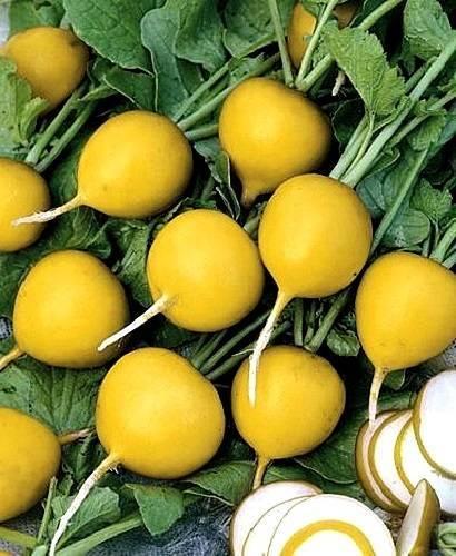 Удачные способы выращивания древнего русского овоща – репы