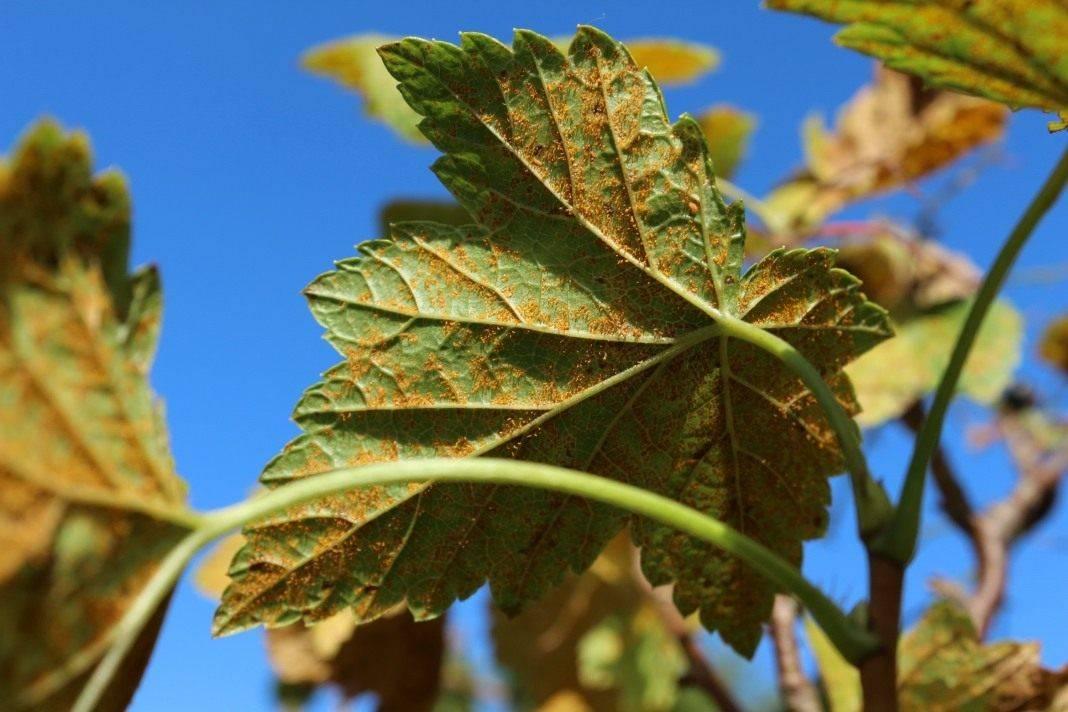 Болезни и вредители плодовых деревьев
