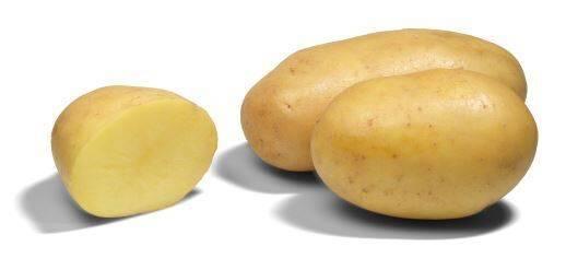 Сорт картофеля «агата»: характеристика, описание, урожайность, отзывы и фото