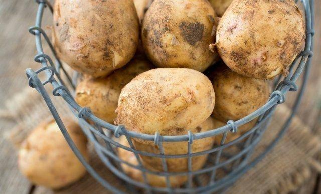 Самый доступный способ: как хранить картошку зимой на балконе?
