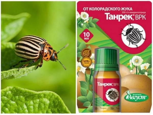Препарат «табу» против колорадского жука и проволочника