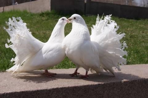 Что едят голуби?