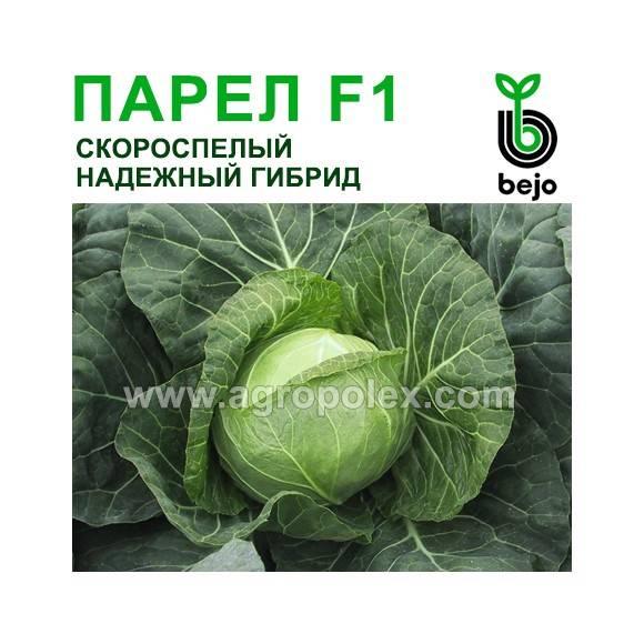 Парел f1: урожайный и неприхотливый гибрид белокочанной капусты