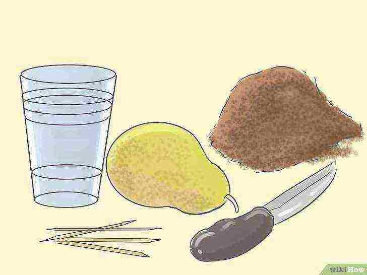 Основные виды подвоев для груши в разных регионах и особенности их выращивания