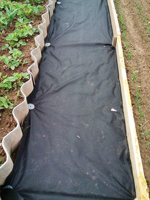 Растет трава на дачном участке: что сделать, чем засыпать, остановить рост травы