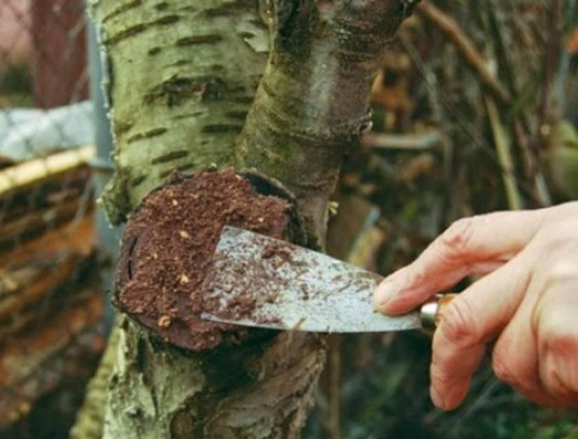 Лечебная болтушка для садовых деревьев. стоит ли обмакивать корни садовых растений при посадке в болтушку из глины? в качестве замазки используют