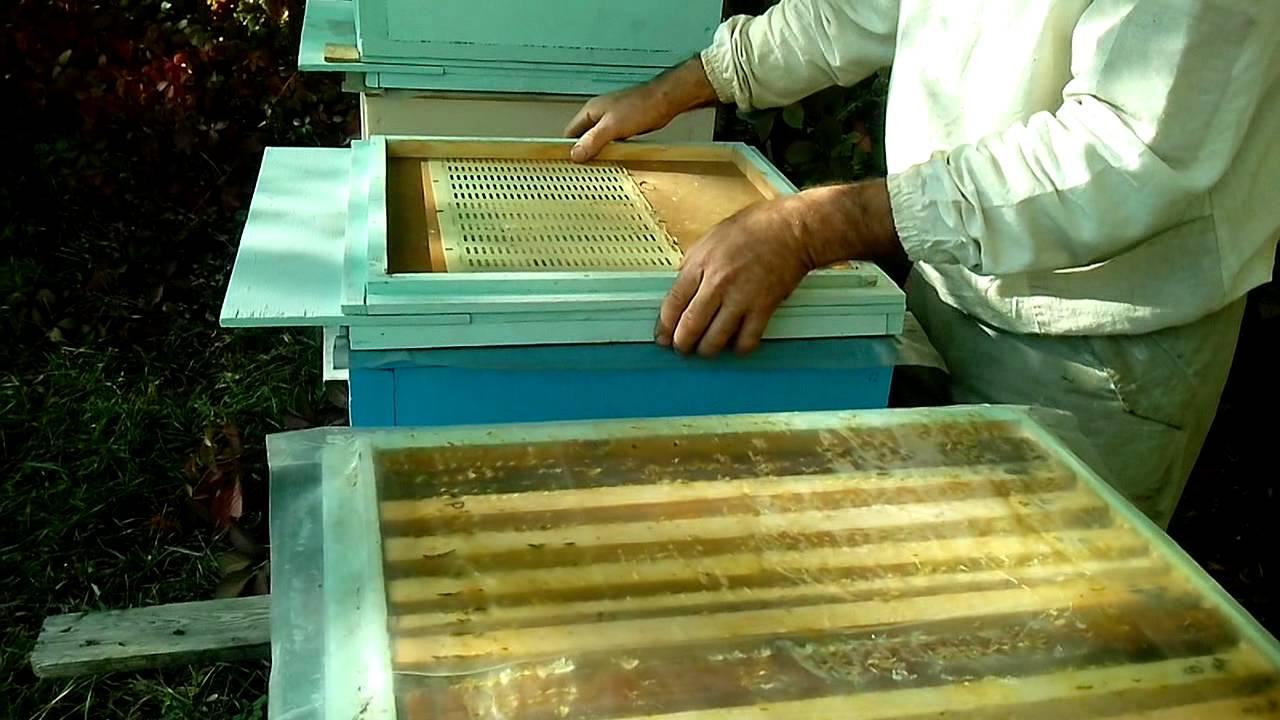 Объединение пчелосемей осенью: как объединить слабые семьи, через газету, перед медосбором