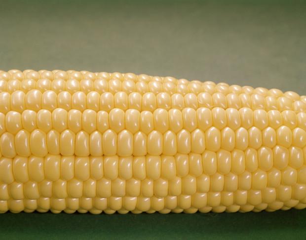 Выращивание сахарной кукурузы в теплице: подходящие сорта, технология и схема посадки, особенности ухода, защита от болезней и вредителей
