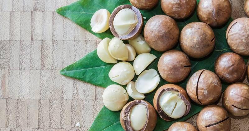 Макадамия — самый дорогой и вкусный орех в мире