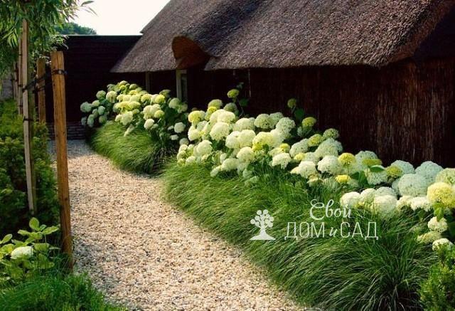 Ландшафтный дизайн: выбираем цветы для посадки