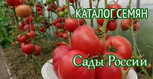 Томат волгоградский — описание сорта, тонкости выращивания