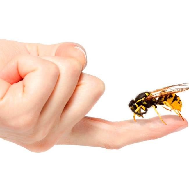 Лечение пчелами: методика, показания и противопоказания к назначению, польза и вред (95 фото)