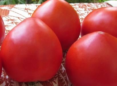 Вкусный томат большая мамочка: отзывы и 30 фото сорта