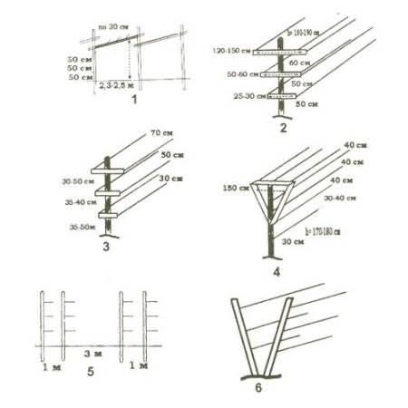 Шпалера для ежевики — схемы, чертежи и идеи как сделать своими руками. лучшие конструкции и правила выращивания (80 фото + видео)