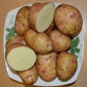 Картофель аврора: 8 особенностей и 10 советов по выращиванию и хранению