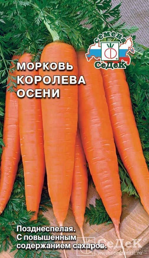 Характеристика и описание моркови сорта осенний король