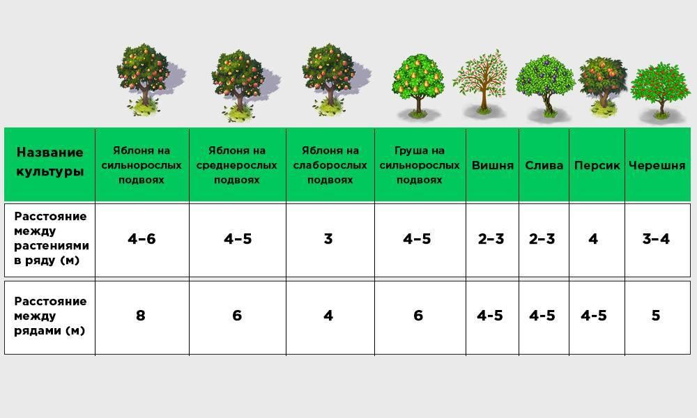 Посадка плодовых деревьев осенью: какие деревья и как сажать