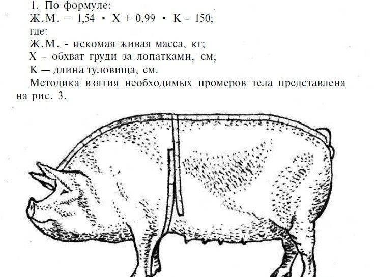 Как узнать массу по таблице веса свиней