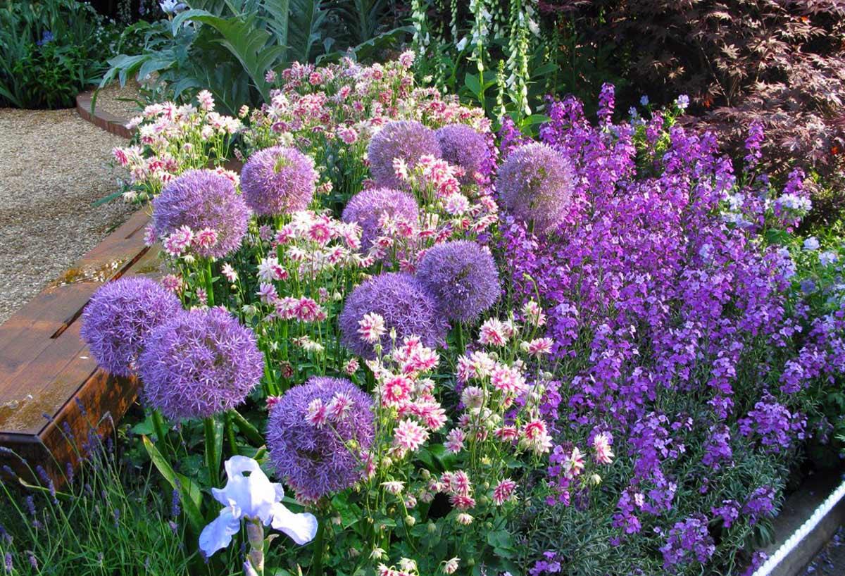 Бузульник: популярные виды и сорта, советы по посадке и уходу за цветком