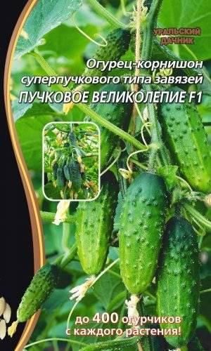 Самоопыляемые пучковые огурцы: 20 сортов для открытого грунта и теплицы