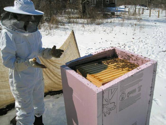 Особенности зимовки пчёл в сарае