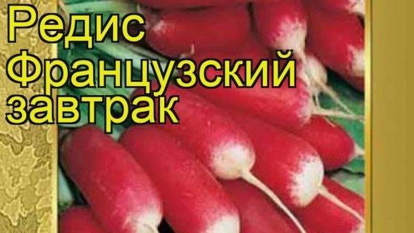 Редис красный великан: отзывы, фото, урожайность