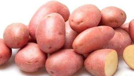 Картофель лабадия — объясняем по порядку