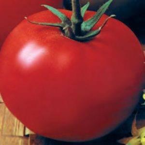 Томаты джина тст: характеристика и описание сорта, выращивание